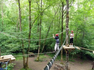 tree-tops-course1